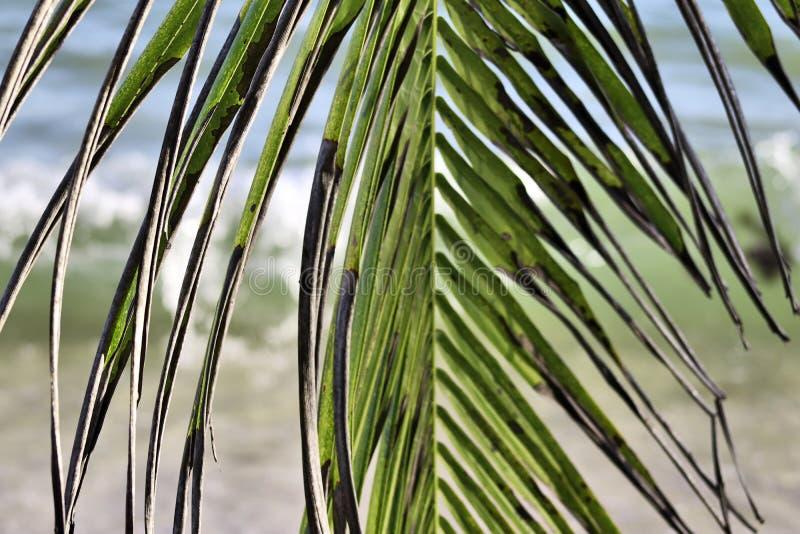 Piękni drzewka palmowe przy plażą na raj wyspach Seychelles obraz stock