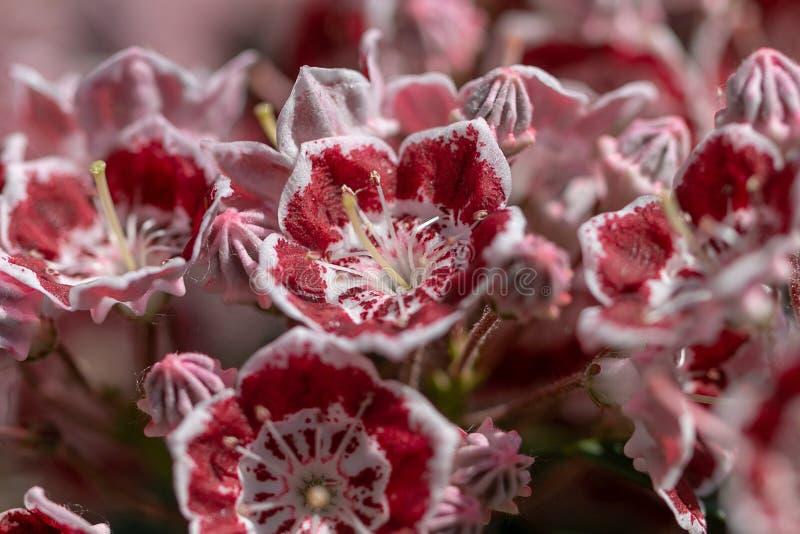 Piękni dwubarwni kwiaty zdjęcie stock