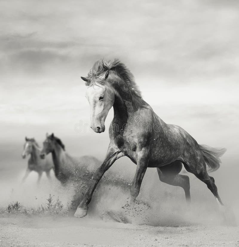 Piękni dzicy konie na wolności fotografia royalty free