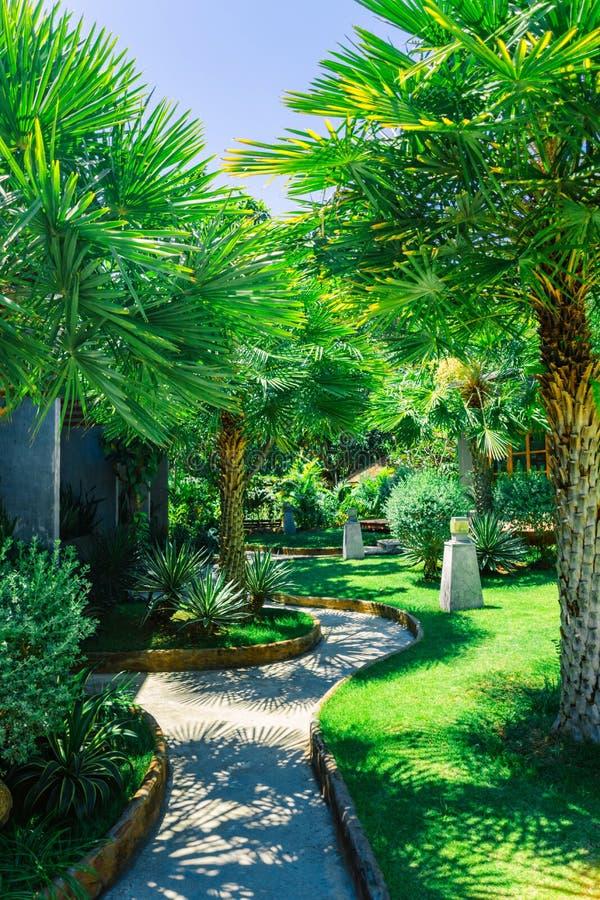 Piękni egzotyczni drzewka palmowe Mały wygodny hotel na wyspie Koh Tao zdjęcie stock