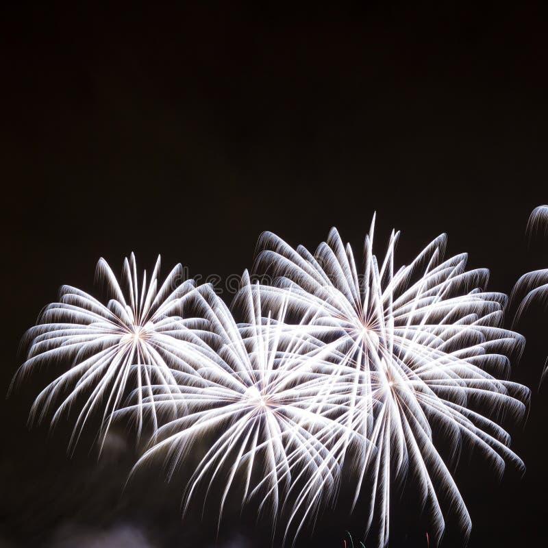 Piękni fajerwerki Na nocnym niebie obrazy royalty free