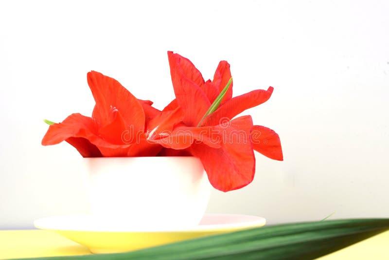 Piękni fragrant gladioluses w białej filiżance na żółtym tle obrazy stock