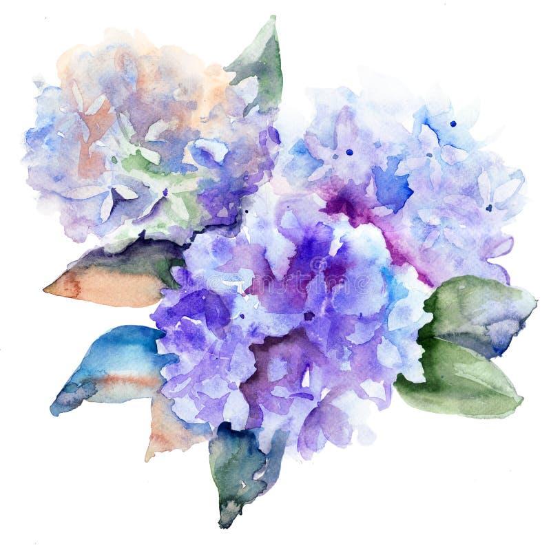 Piękni hortensi błękita kwiaty ilustracji