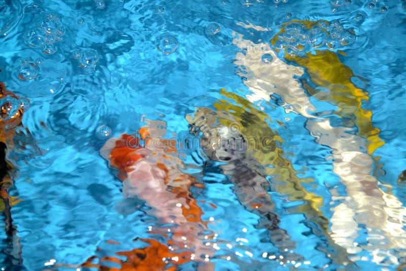 Piękni i colourful ryba fantazi karpie w plastikowym stawie zdjęcia stock