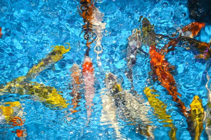 Piękni i colourful ryba fantazi karpie w plastikowym stawie zdjęcia royalty free