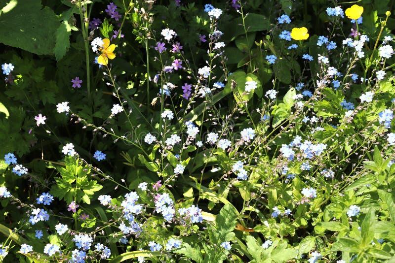 Piękni i kolorowi kwiaty w niemiec wiosny i lata uprawiają ogródek fotografia stock
