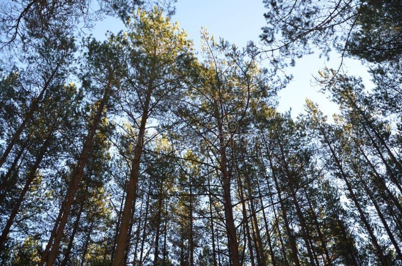 Piękni i wysocy drzewa wokoło fotografia stock