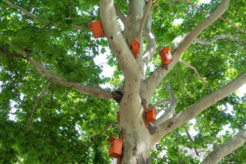 Piękni jaskrawi pomarańczowi birdhouses na płaskim drzewie fotografia royalty free