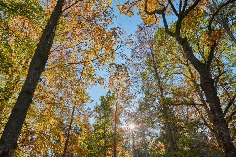 Piękni jesień kolory w lesie obrazy stock
