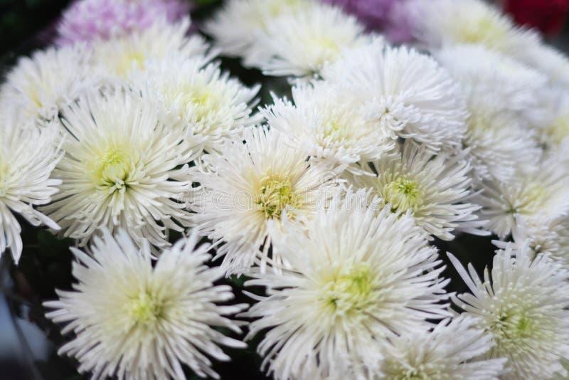 Piękni jesień kwiaty zamknięci w górę zdjęcia royalty free