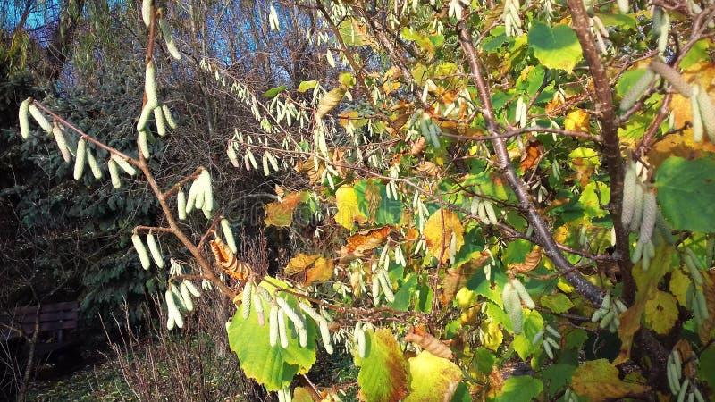 Piękni jesień liście na jasnym dniu obraz royalty free