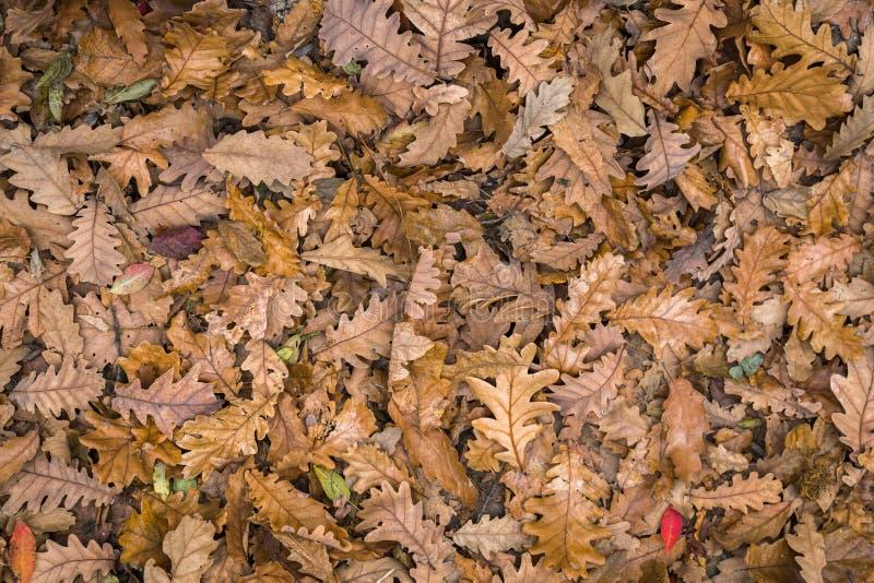 Piękni jesień liście podłogowi w lesie zdjęcie royalty free