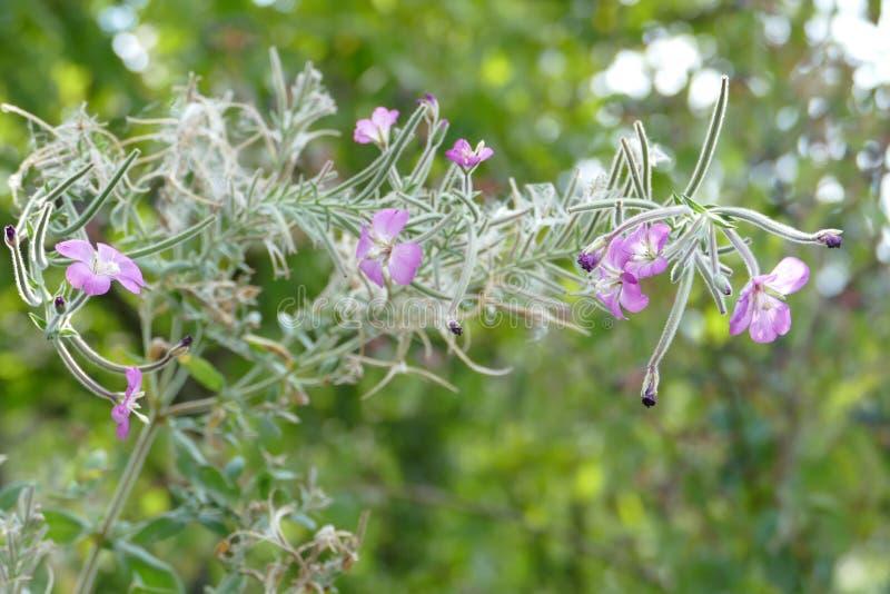 Piękni jesieni Wildflowers fotografia royalty free