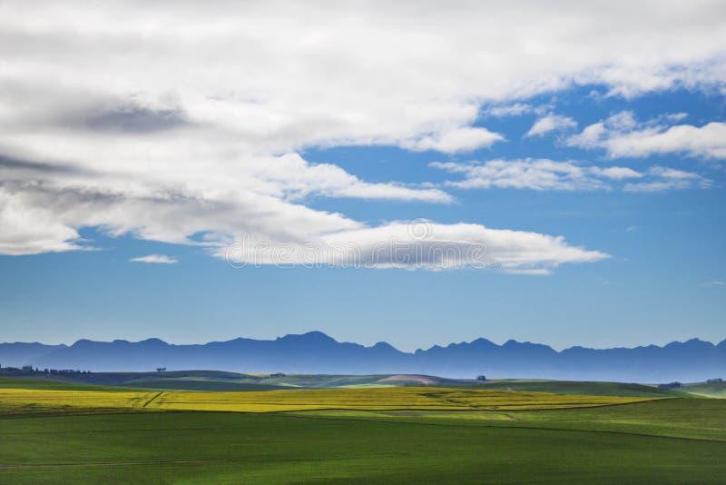 Piękni kołysanie się koloru żółtego, zieleni pola z górami w odległości z i Caledon, Zachodni przylądek, Południowy Afr fotografia royalty free