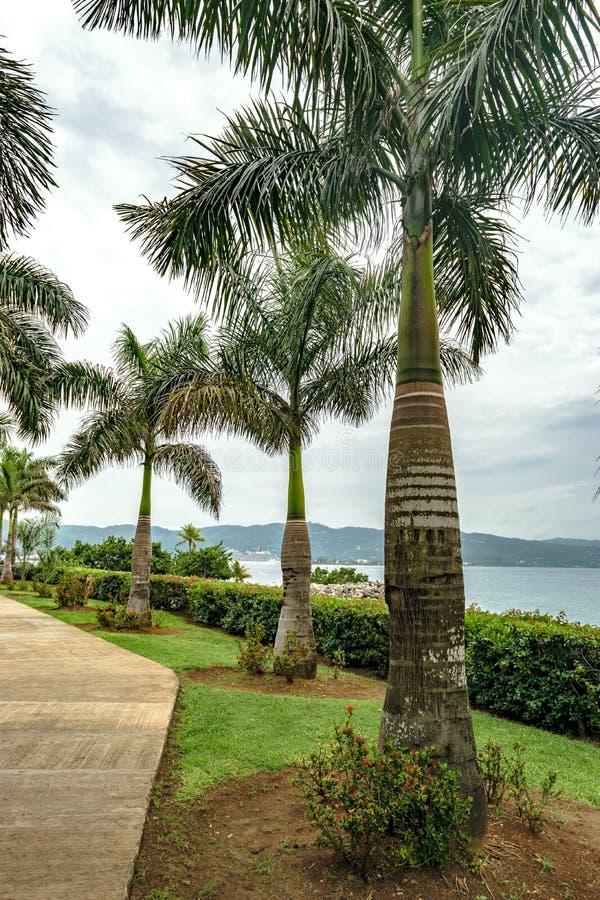 Pi?kni kokosowi drzewka palmowe w?rodku Starego szpitala parka w Montego Bay mie?cie, Karnawa?owy statek wycieczkowy dokowali w b obrazy royalty free