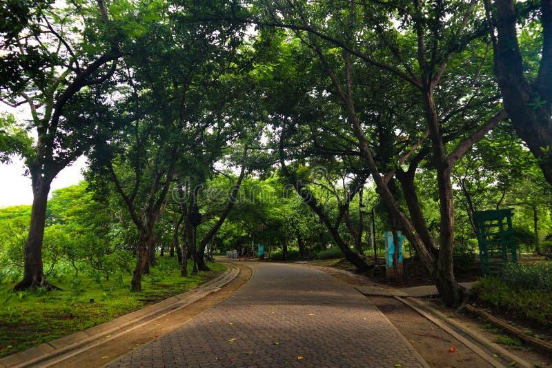 Piękni kolorowi czerwieni, menchii kwiaty i zasadzają drzewnego las w jawnego ogródu i zieleni miasta parkach obraz royalty free