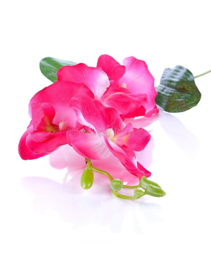 Piękni kolory plastikowi kwiaty zdjęcie royalty free