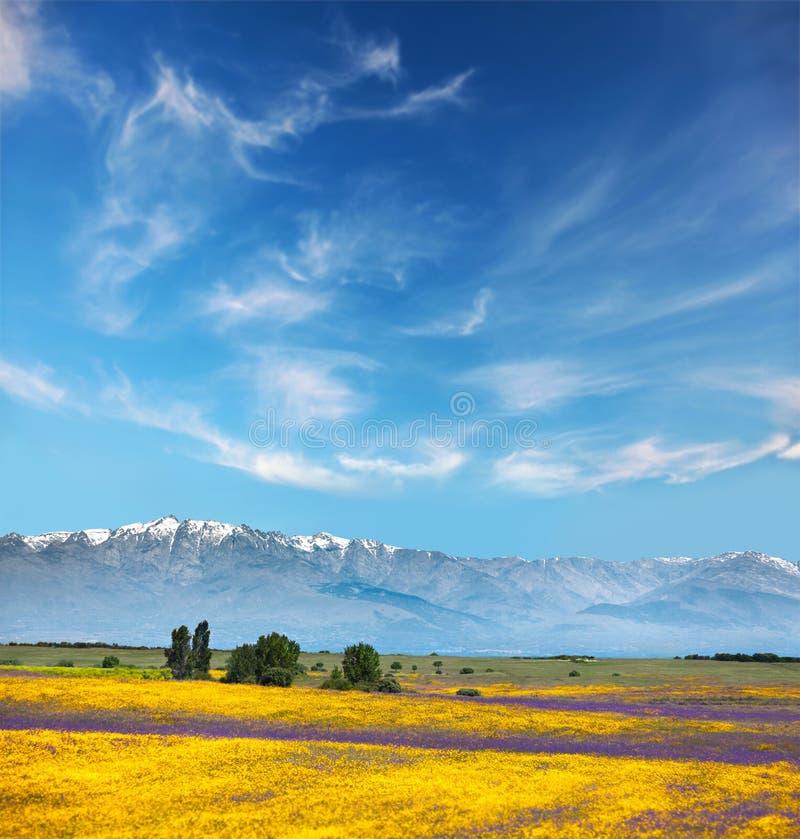 Piękni kolory w Halnych doliny, koloru żółtego i purpur kwiatach/ fotografia stock