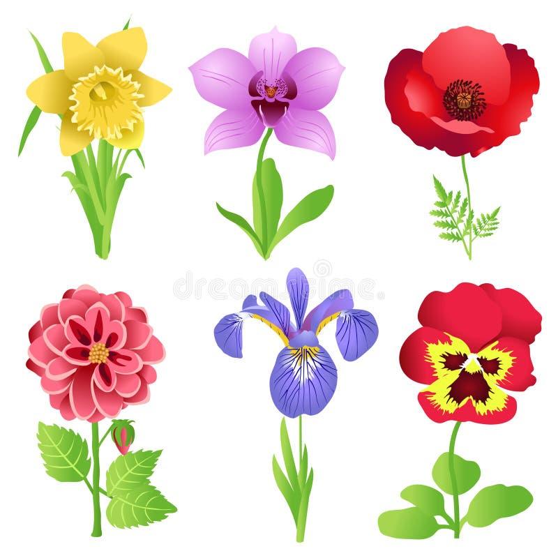 piękni kwiaty ilustracja wektor