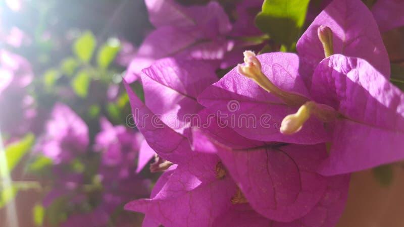 Piękni kwiaty fotografia royalty free