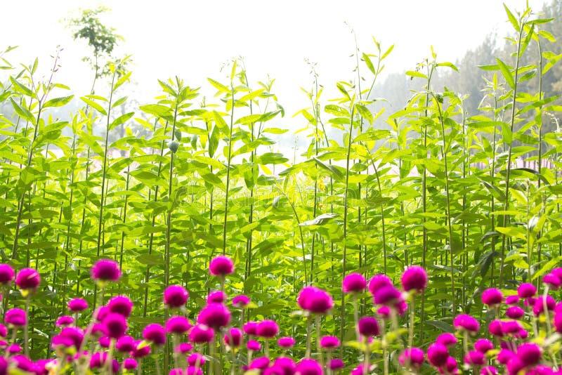 Piękni kwiaty i liście fotografia stock