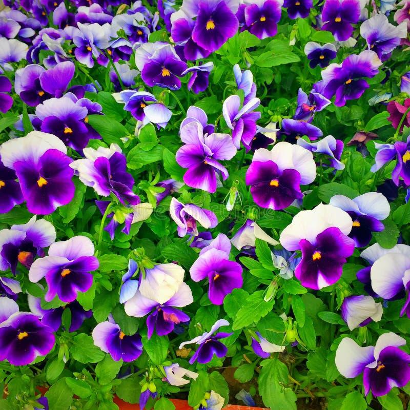 Piękni kwiaty i naturalne rośliny Kwiatu Garden fotografia stock