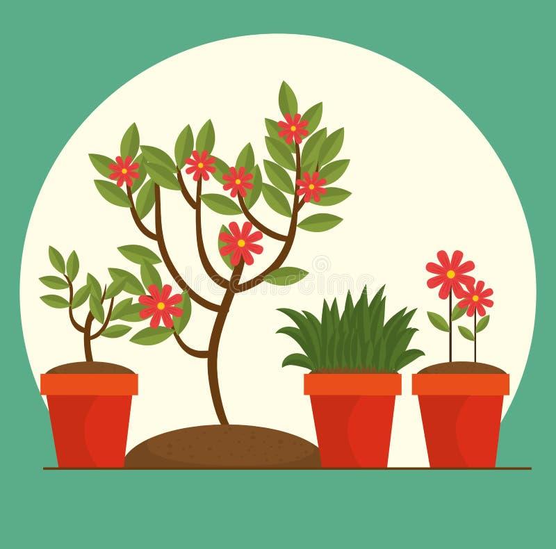 Piękni kwiaty i rośliny kultywujący w garnku royalty ilustracja
