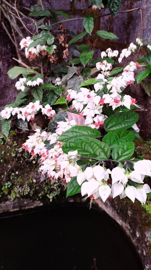 Piękni kwiaty i rośliny przy babcia podwórko mieścą -10 obrazy royalty free