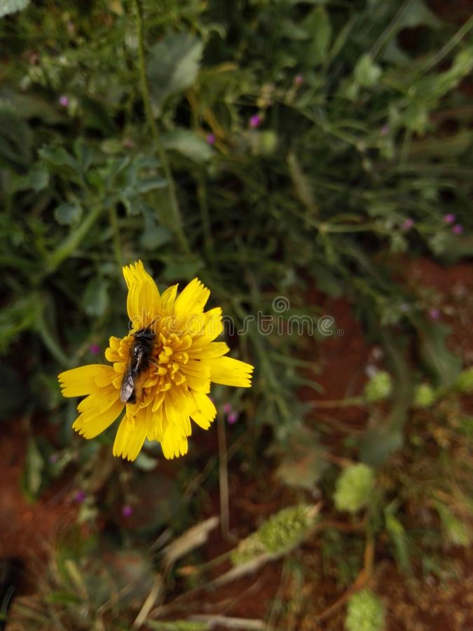 Piękni kwiaty Morocco zdjęcia royalty free