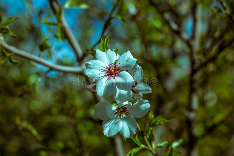 Piękni kwiaty na drzewnej wiośnie obraz stock