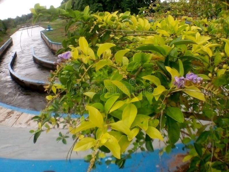 Piękni kwiaty na Irigasi obraz royalty free