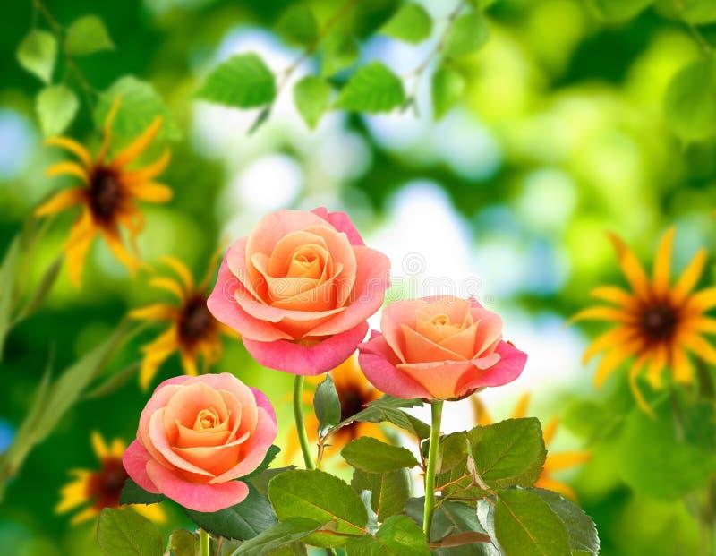 Piękni kwiaty na zielonym tła zakończeniu zdjęcia stock