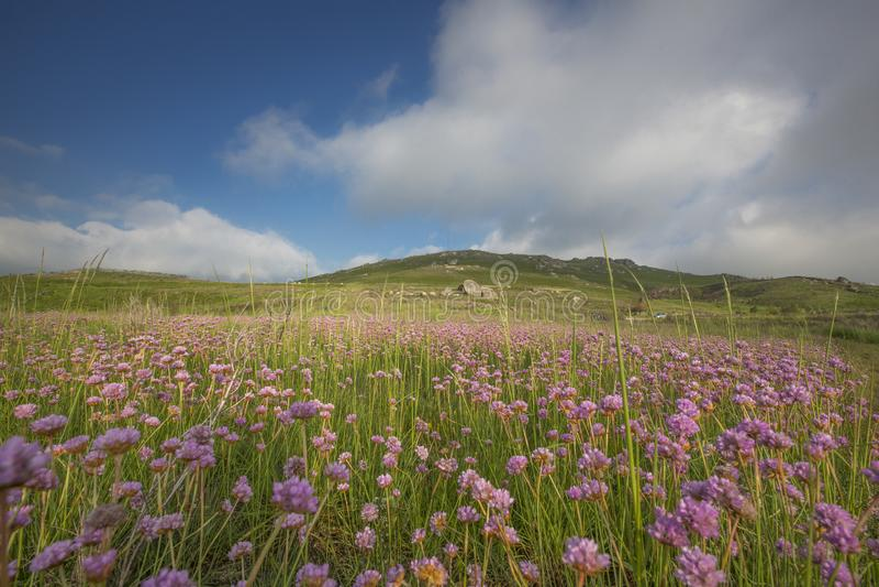 Piękni kwiaty pod wielkim niebieskim niebem zdjęcie royalty free