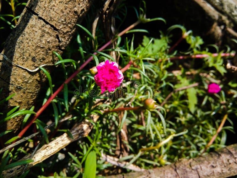Piękni kwiaty są nature& x27; s życie zdjęcia stock
