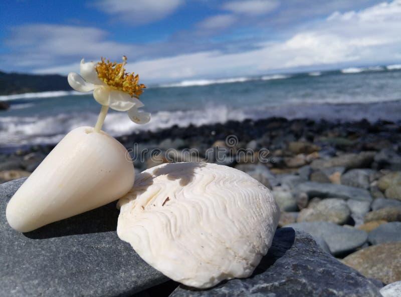 Piękni kwiaty w Latuhalat plaży obraz stock
