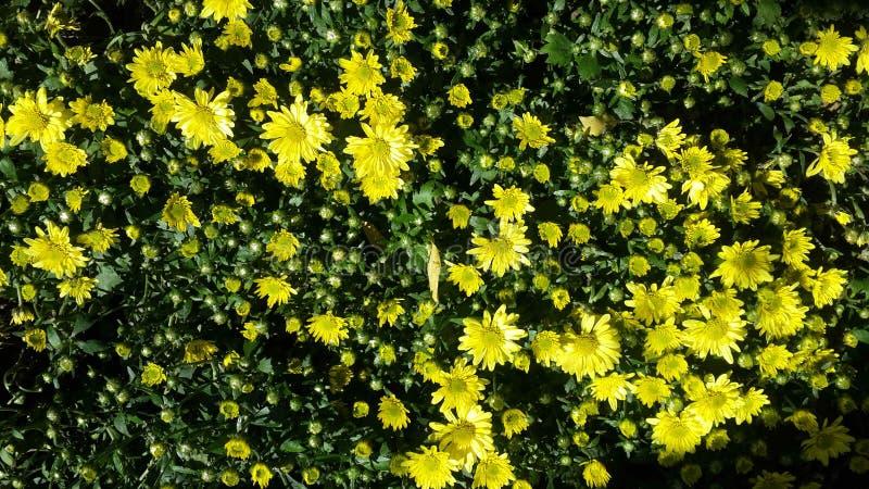 Piękni kwiaty w ogródzie pod zimy słońcem zdjęcia royalty free