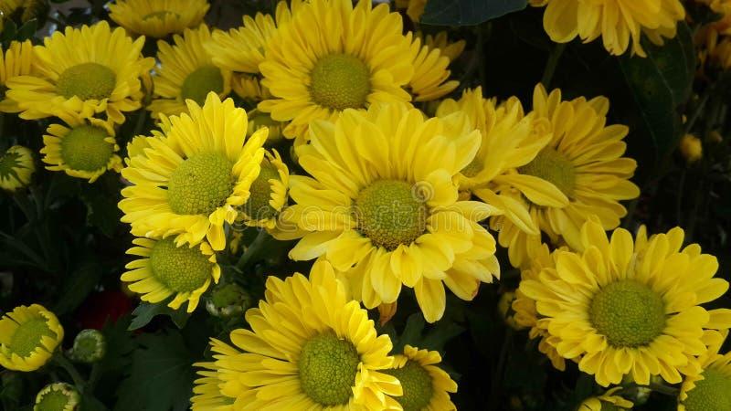 Piękni kwiaty w ogródzie pod zimy słońcem obrazy royalty free