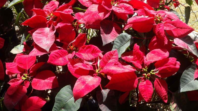 Piękni kwiaty w ogródzie pod zimy słońcem fotografia stock