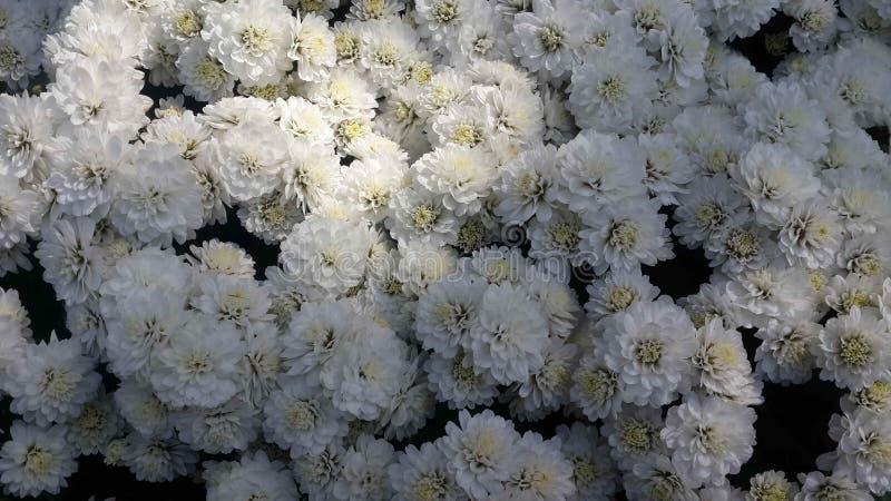 Piękni kwiaty w ogródzie pod zimy słońcem obrazy stock