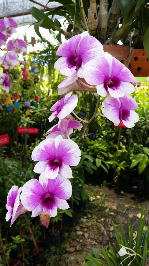 Piękni kwiaty warci ty jeden zdjęcia stock