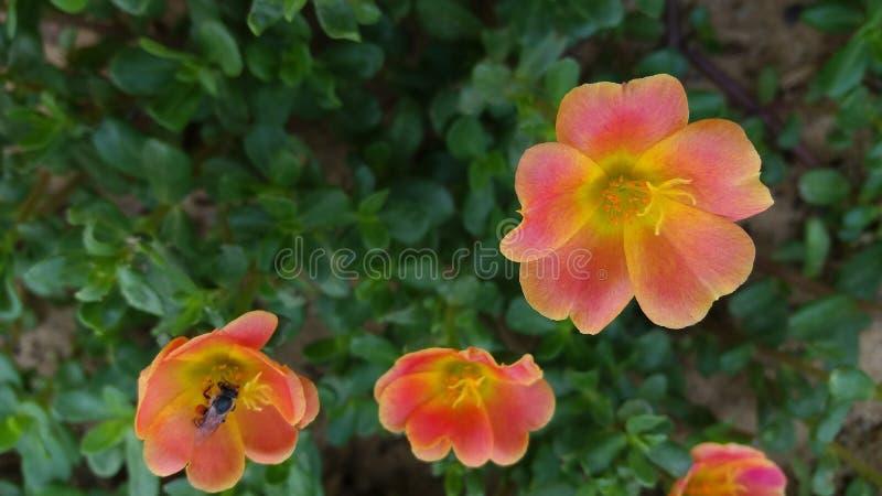 Piękni kwiaty warci ty jeden obraz stock