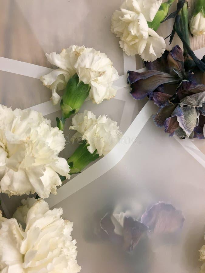 Piękni kwitnie coloured brązu, błękitnych i różowych goździki, zdjęcia royalty free
