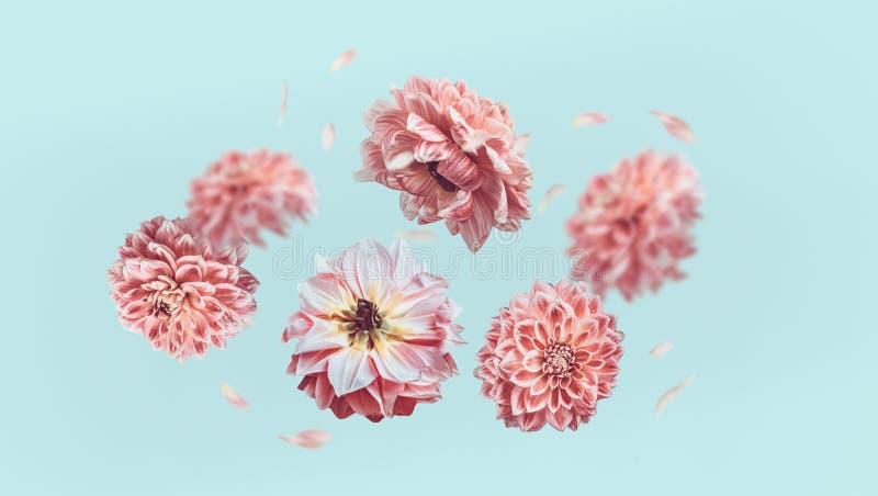 Piękni latający pastelowych menchii kwiaty i płatki przy bławym tłem, kreatywnie kwiecisty układ zdjęcia stock