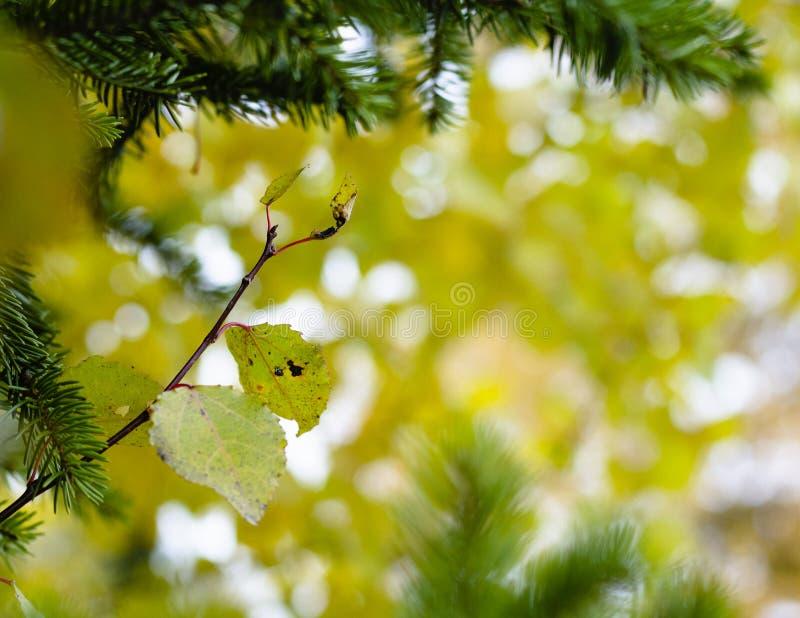 Piękni liście z żółtym bokeh zdjęcia royalty free