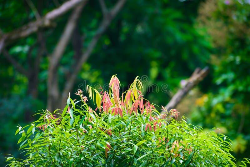 Piękni menchii i zieleni liście na plamy greenery lasowym tle na słonecznym dniu obrazy stock
