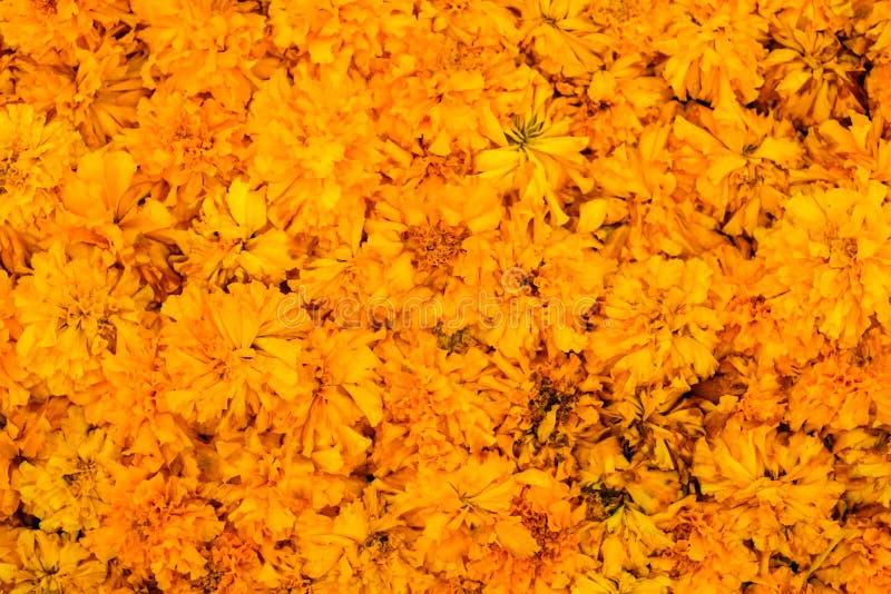 Piękni nagietka Calendula officinalis dla kwiatu tła fotografia stock