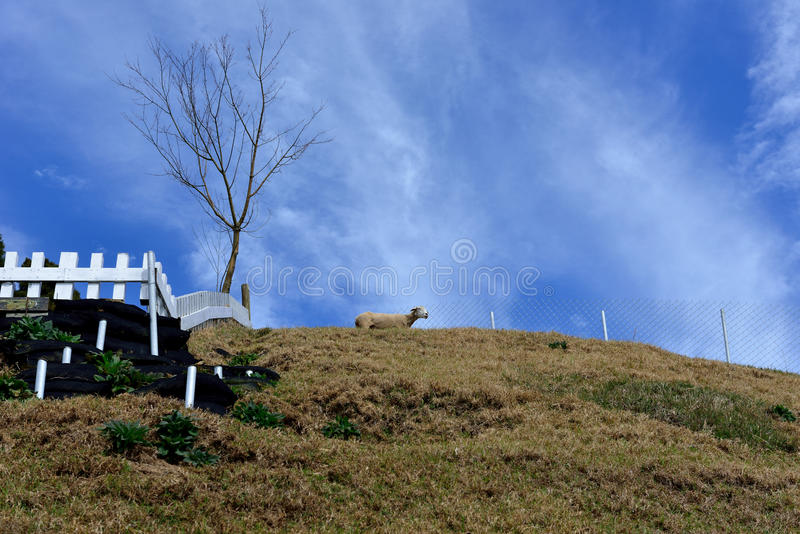 Piękni obszarów trawiastych paśniki zdjęcia royalty free