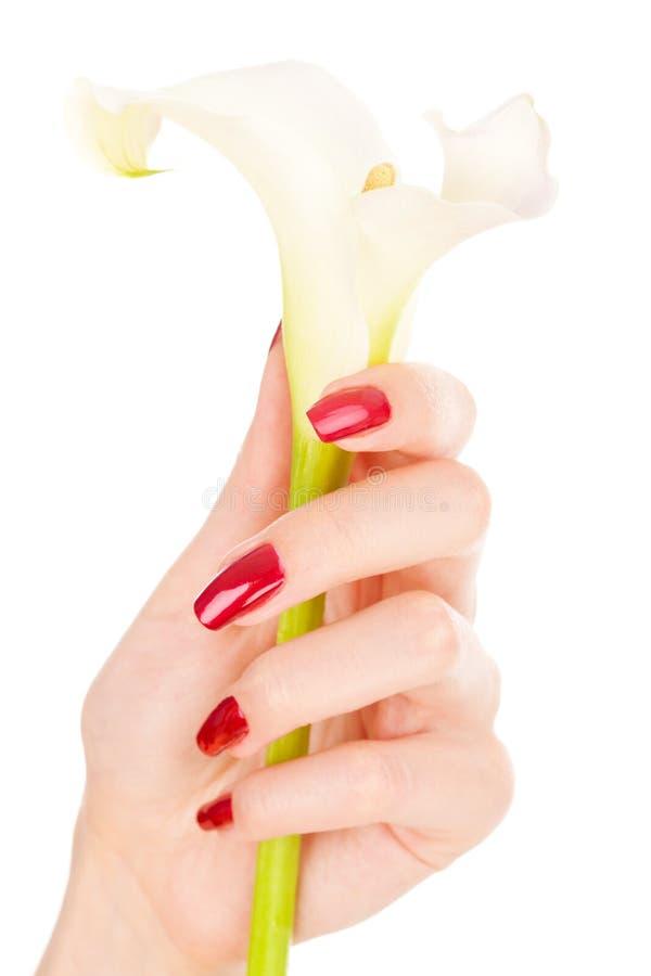 piękni palców kwiatu gwoździe obraz royalty free