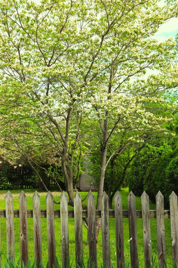 Piękni Prości Wysocy drzewa Z palika ogrodzeniem fotografia stock