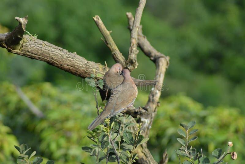 Piękni ptaki zdjęcia stock